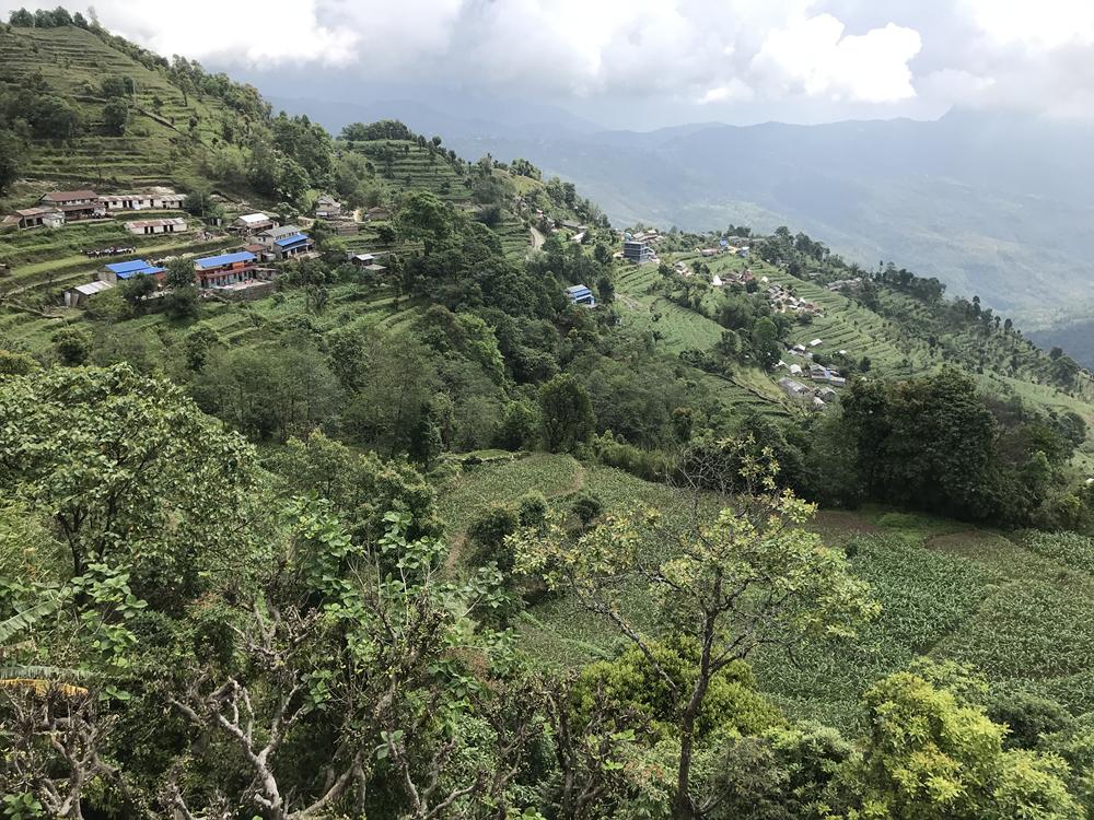 http://www.nepalvillagehike.com/wp-content/uploads/2018/08/root1_006.jpg