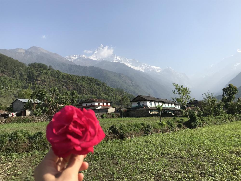 http://www.nepalvillagehike.com/wp-content/uploads/2018/08/root3_006.jpg